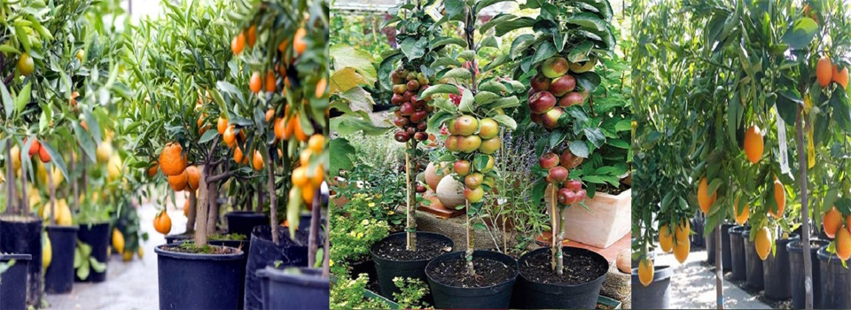 Best Plant Nursery Near Me | Biggest Plant Nursery At Your Nearby