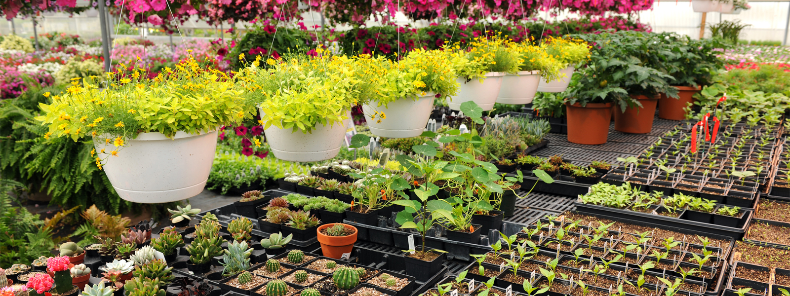 Best Plant Nursery Near Me Biggest Plant Nursery At Your